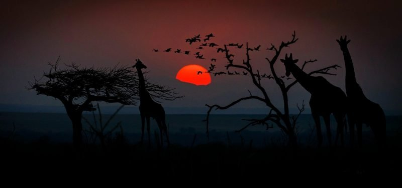 Kenya, Safari, sunset