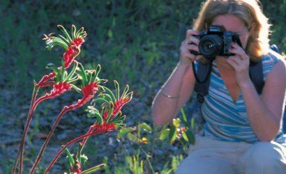 Perth Hills Wildflower Tour