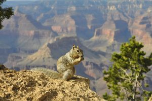 6-Day West Grand Canyon