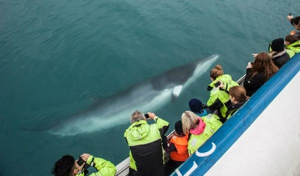 2-Hour Whale Watching Cruise from Reykjavik