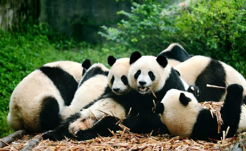12-Day China Cultural Expedition Private Tour: Shanghai, Chengdu, Xi`an, The Great Wall, Beijing