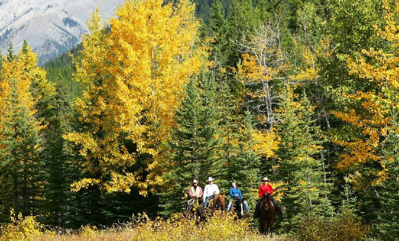 Sulphur Mountain Horse Riding Tour