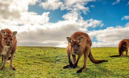 5-Day Adelaide and Kangaroo Island Discovery Tour From Adelaide