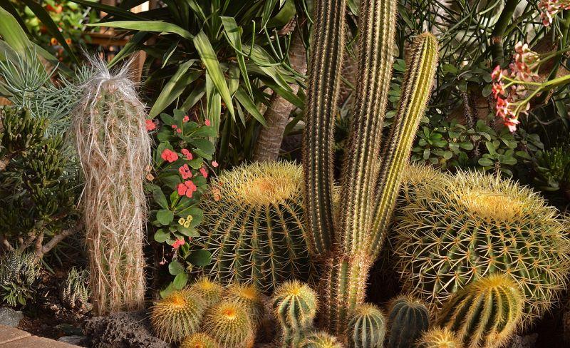 Ethel M. Chocolate Factory and Botanical Cactus Gardens